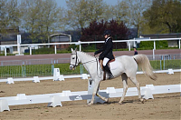 cheval CDE dressage